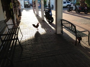 Unexpected rooster.
