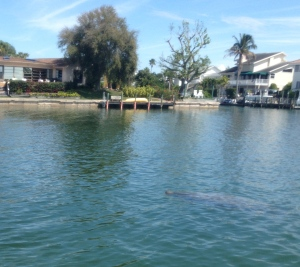 Moment of Grace.  That thing that looks like a big baked potato in the water is actually one of four manatees come to play with us.