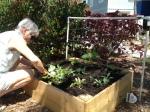 Enriching the soil.
