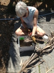 Making mulch out of palm fronds.