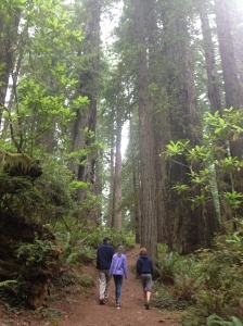 Hiking through some Redwoods.  They are tall.
